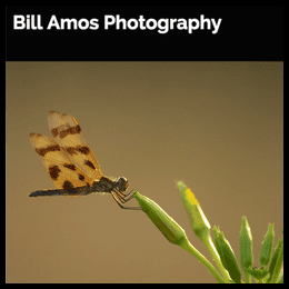 http://www.billamosphotography.com